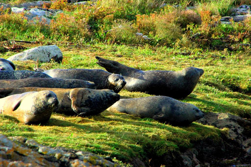seals active retirement groups